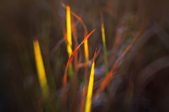 Blade grass in Summer colours
