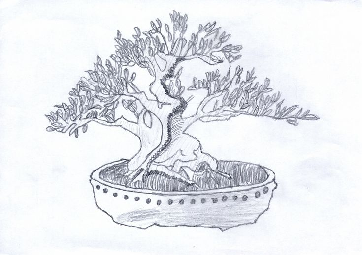 1000  ideas about bonsai tattoo on pinterest