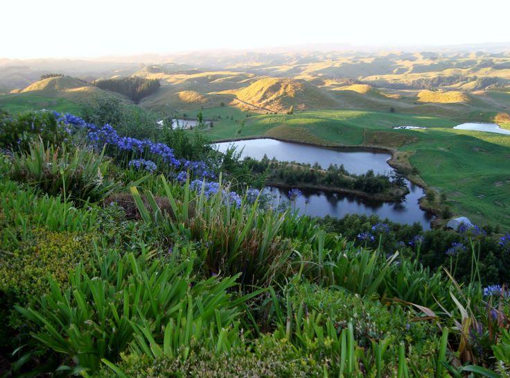 View at Orlando Country #NewZealand