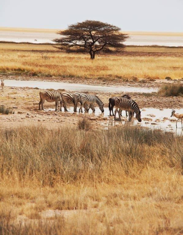 Safari in Etosha, Namibia www.africantravel.com #africantavel #etosha #namibia