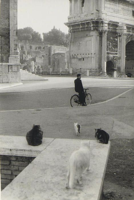 Henri Cartier-Bresson, Rome, 1959 - Ahhhh, the cats of Italy. I loved to see them, eating a plate of spaghetti, on the front stoop of a little apartment...