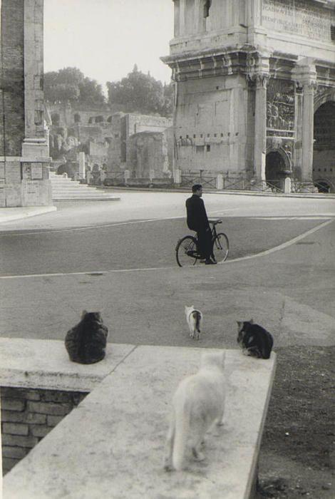 """Dire """"gatti"""" a Roma significa riferirsi alla virtuosa tradizione che ha…"""
