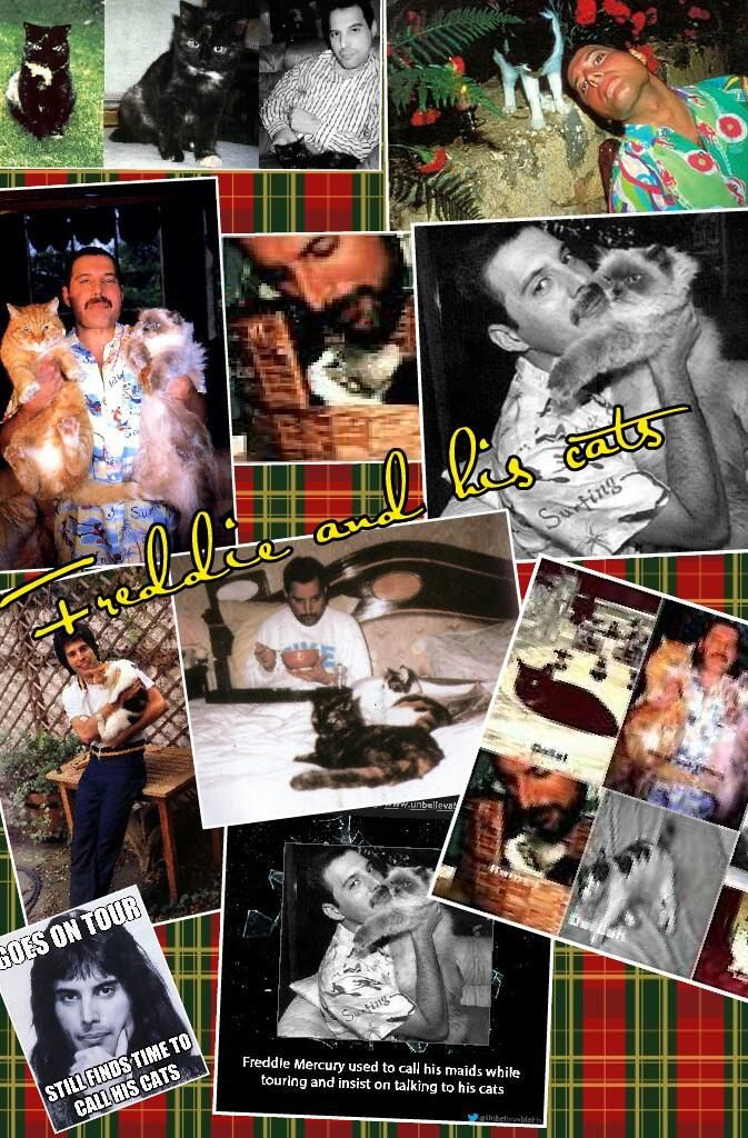 36 Best Images About Freddie And His Cats On Pinterest