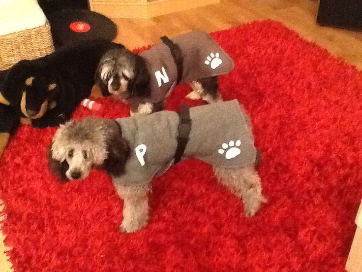Talvimanttelit koirille