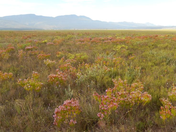 Bontebok National Park, near Swellendam
