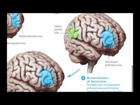 ¿Qué sucede en el cerebro al practicar Mindfulness? - YouTube