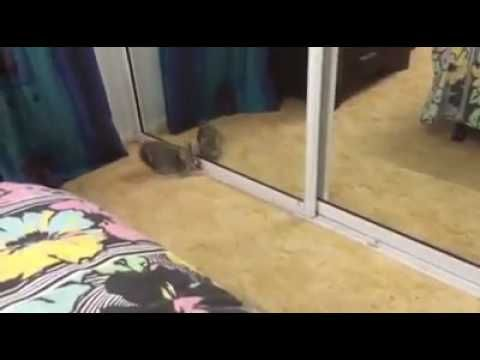 Funny cat videos# most funny cats -  #animals #animal #pet #cat #cats #cute #pets #animales #tagsforlikes #catlover #funnycats  Learn how to speak cat! Click HERE for the cat bible! Cats are smarter than man, but sometimes they are too dumb  - #Cats