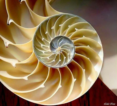 La Proporción Áurea, Secuencia Fibonacci, Hunab Ku, Movimiento y Medida de la Vida y del Universo : geometría y matemáticas. V 1.0 | Xochipi...