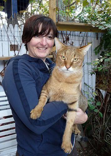 Chausie Cat ~ quite big | animals | Pinterest | Chausie Cat, Cats ...
