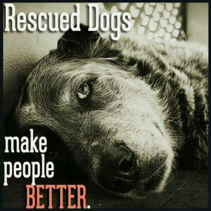 Dogs Rescuing People