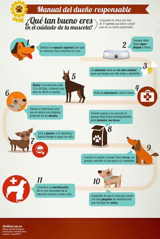 Mundo mascotas: 10 recomendaciones para el dueño responsable | Alto Nivel