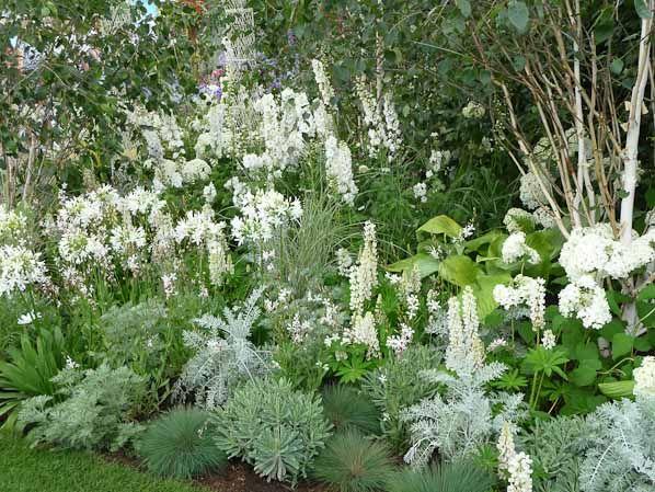 Massif blanc, 50 years rhs Britain in Bloom, Hampton Court Flower Show, Royaume-Uni, 8 juillet 2014, photo Alain Delavie