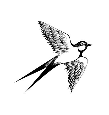 Hand drawn swallow doodle shading style engraving vector - by i_panki on VectorStock®