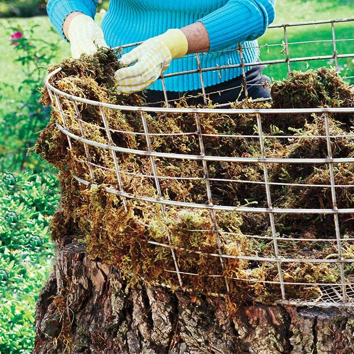 Form the Basket. Use an old wire basket, or form one from galvanized steel field fencing (#254106) cut to size. Cut and fold a portion of the wire fencing inward to serve as the base, then attach to the stump with wire tacks.  Good to Know: To extend the life of the tree stump and discourage insects, apply a preservative such as polyurethane to the stump before starting the project.