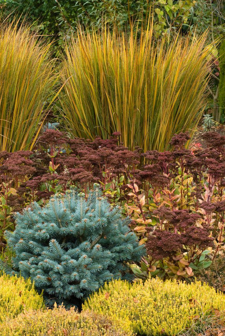 68 best garden shrubs images on pinterest garden shrubs