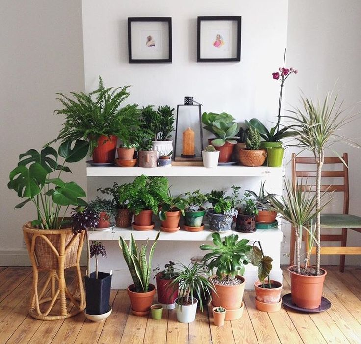 35 Indoor Garden Ideas To Green Your Home: 158 Best Images About House Plants On Pinterest
