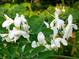 How to grow Moringa Trees - the miracle tree - gram for gram its leaves have 25x the iron of spinach, 17x the calcium of milk, 15x the potassium of bananas, 10x the vitamin A of carrots and 9x the protein of yogurt.