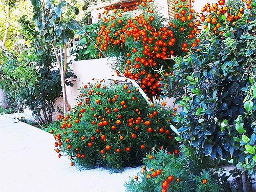 Φθινοπωρινά χρώματα του κήπου | Flickr - Photo Sharing!
