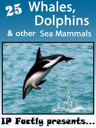 17 Best Images About Marine Mammals On Pinterest