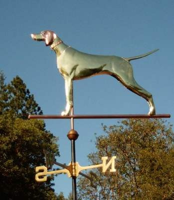 English Pointer, Standing Dog Weathervane by West Coast Weather Vanes.  This copper  English Pointer Dog weathervane features a glass eye and distinctive tooling which gives the body realistic dimensions.