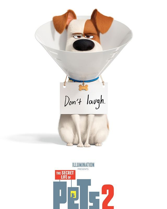 Universal Pictures And Illumination Entertainment Have Released The First Trailer And Poster For The Secret Life Of Pets Secret Life Illumination Entertainment