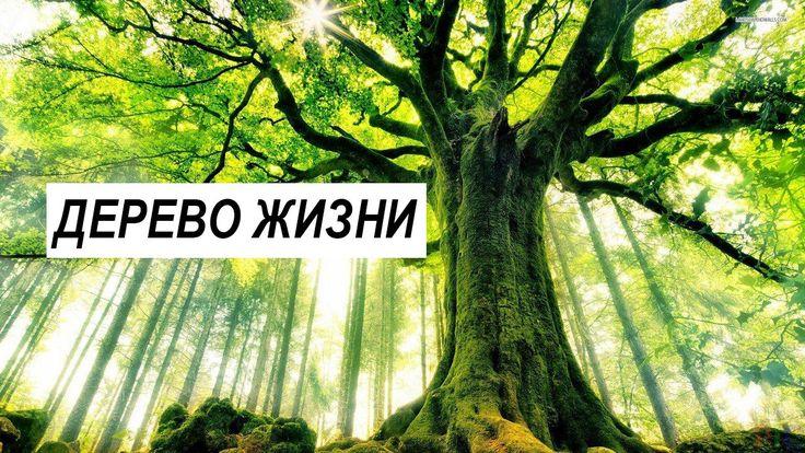 """29 апреля пройдет благотворительная акция """"Дерево жизни"""". Любой желающий сможет посадить дерево Подробнее http://www.nversia.ru/news/view/id/104650 #Саратов #СаратовLife"""