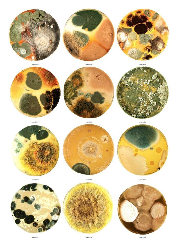 Lizan Freijsen - Fungi. Kringen als water die steeds groter worden. De schoonheid van vlekken, schimmels en heel veel onderzoek.