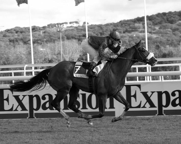 Young Tiger, Hipódromo de la Zarzuela de Madrid. Premio Hispanidad by Maktub
