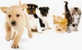 L'amore per i cani e i gatti non conosce vacanze! Siete d'accordo? #pet #estate2014