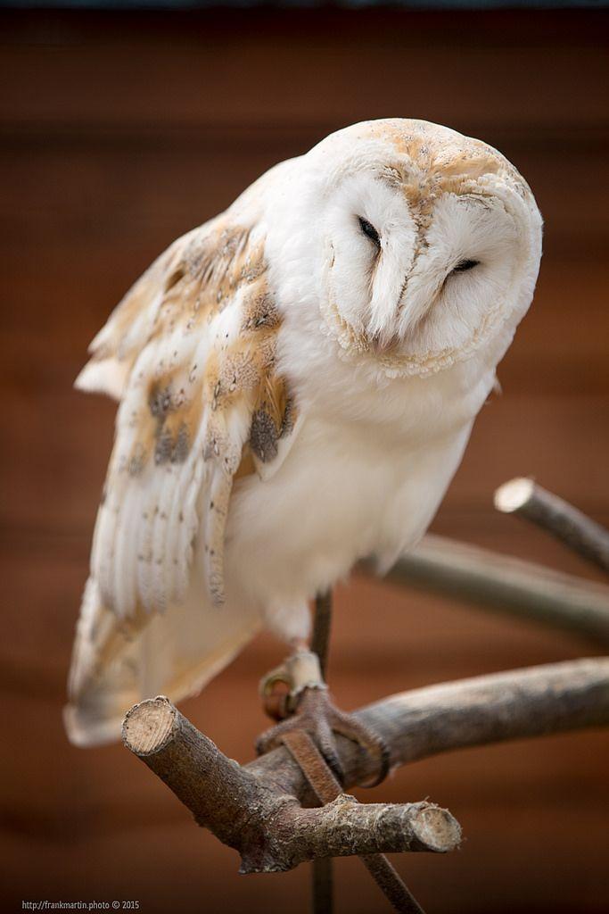 Owl https://flic.kr/p/z1X9ZR