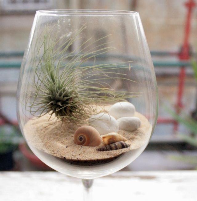 weinglas deko tillandsien sand muscheln terrarium