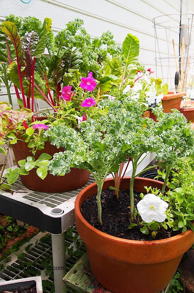 My Container Vegetable Garden / Growing vegetables in containers is great if you don't have the space or the time to tend to a traditional garden. You can really grow all kinds of vegetables and fruits in containers!