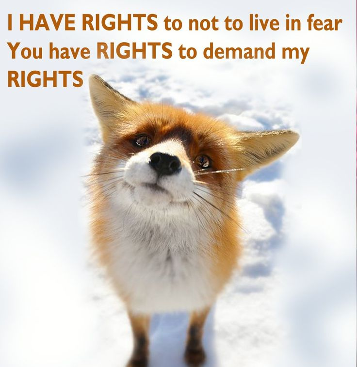 (1) The Dog Crusader (@DogCrusader)   Twitter    magma @mmlondonstudio  51m51 minutes ago  More   I HAVE RIGHTS to not to live in fear!!! YOU have RIGHTS to demand my RIGHTS!!!!! act now fill and share the survey https://www.surveymonkey.co.uk/r/Q3H26YS