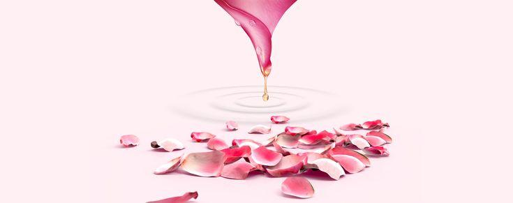 النبيذ الكحول زجاج المشروبات الخلفية Rose Petals Petals Pink Rose