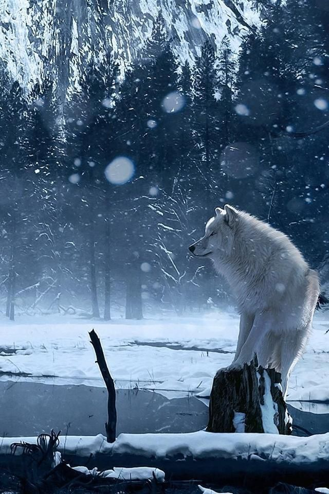 фарада чаще картинка лес волк снег удобства