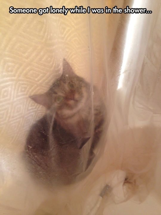 Is your camera waterproof?! Who has a camera in the shower! - My cats do this all the time! :D