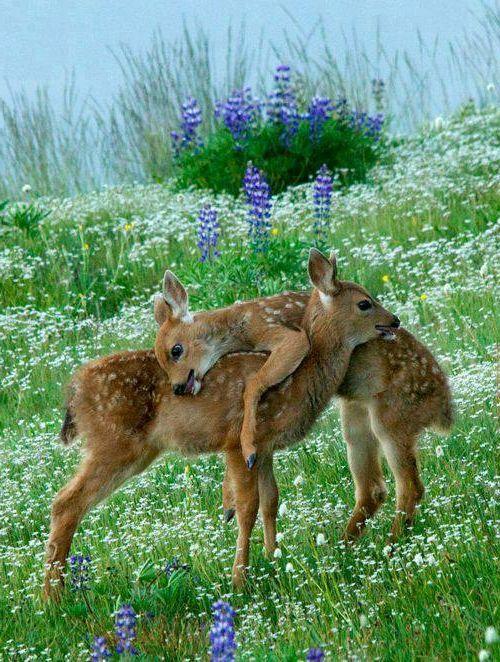 30 süße Baby Tiere - Sehen sie doch nicht niedlich aus ...