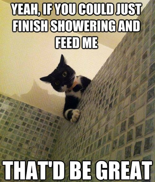 Cat Humor | If you could just finish showering and feed me! | From The Crazy Cat