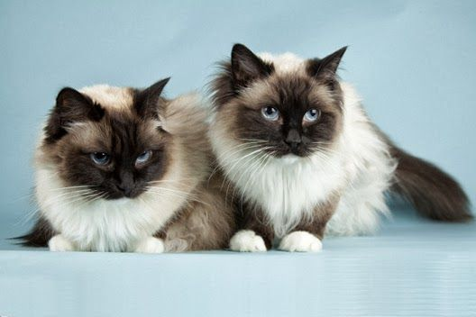 Kocur czy kotka?