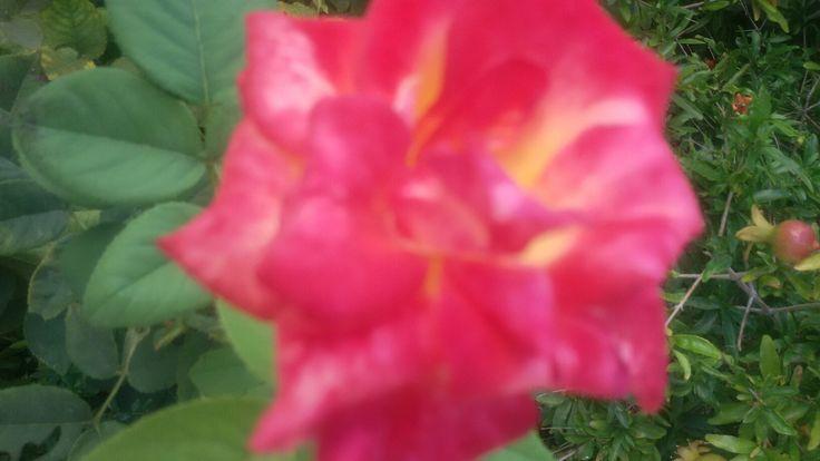 """Ανέβα... ΄΄΄ '''  Και πες """"ευχαριστώ"""". 'Οχι στα τριαντάφυλλα, όχι στα μαχαίρια. Πες ευχαριστώ στη δύναμη, που σ' έκανε ν' ανέβεις'''''''''"""