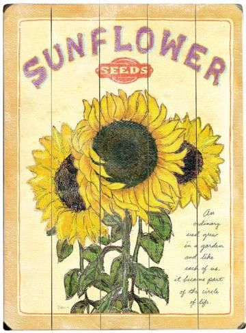 Vintage Flower Seed Packet - An ordinary seed grew in a garden and like each of us it became part of the circle of life.