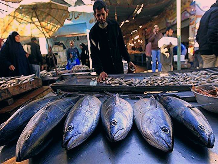 Pin By Saul Jacobi On السمك والمأكولات البحرية Fish Meat Views