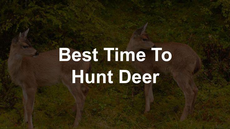 Best Time To Hunt Deer