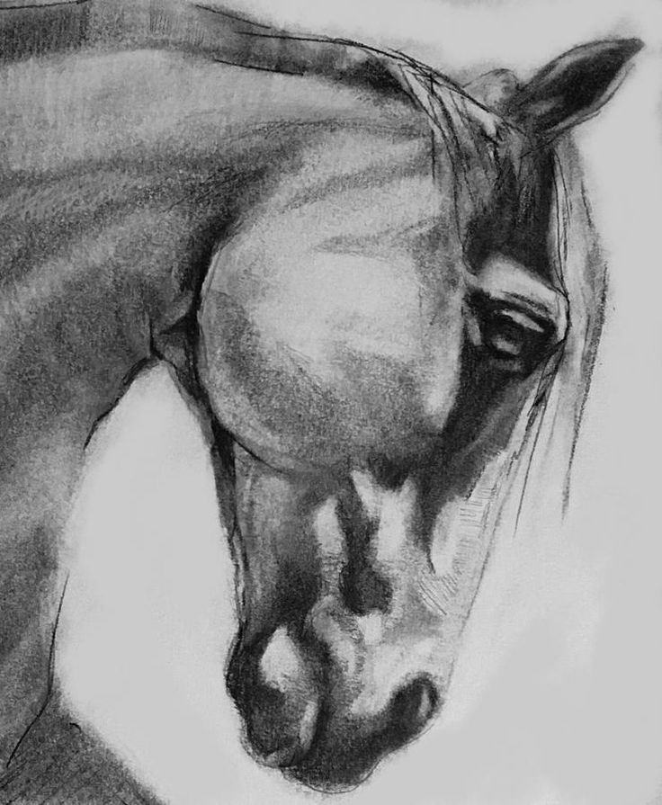 Cheval Horse Classic Graphite Charcoal Drawing Drawing by Michele Carter