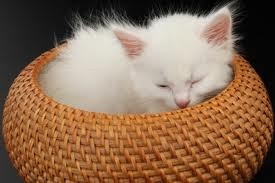 Two of my favorites:  cats and baskets