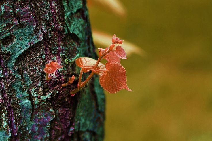 red leaves by mircea mustatea on 500px