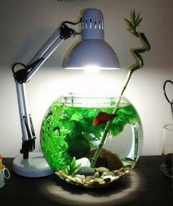 Круглый аквариум: особенности содержания | Статья