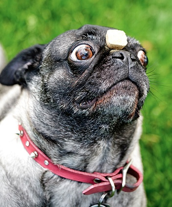 Can I eat it now???!?!?!??: Animal 3, Bugs Eye, Animal Pugluv, Pugs Patrol, Pugs Envey, Pugs Naci, Animals 3, Pugs Life, Pugs Collection