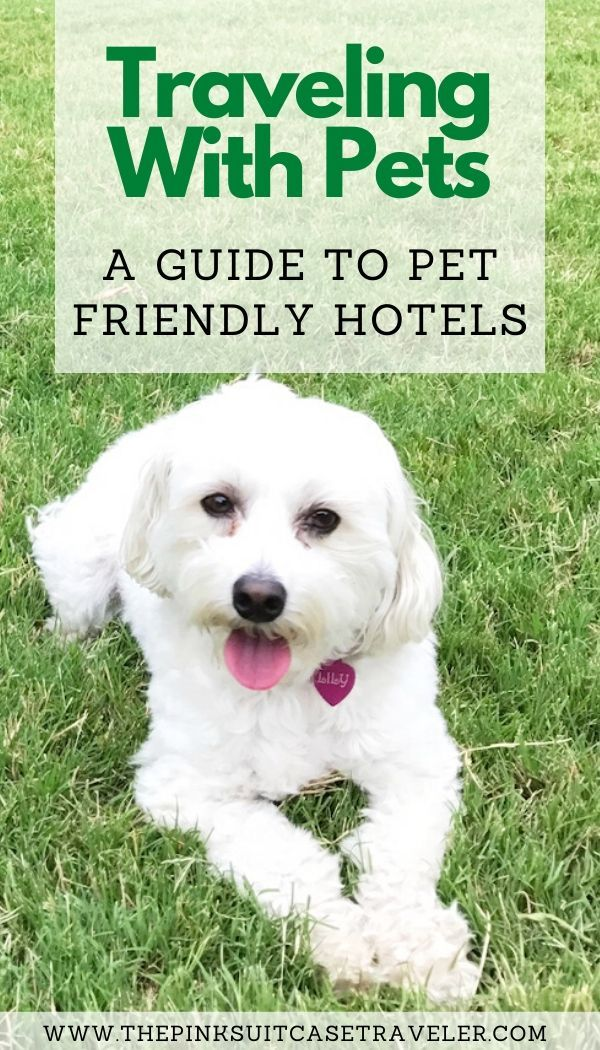 Pin on Best Pet Friendly Hotel Chains in the US