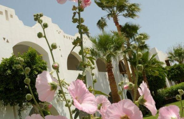 Un'autentica oasi che offre una magnifica vista sulla baia, dalla zona più alta del resort. Il complesso, immerso in una lussureggiante vegetazione e costituto da caratteristiche costruzioni in stile moresco, è situato in prossimità della reception principale.